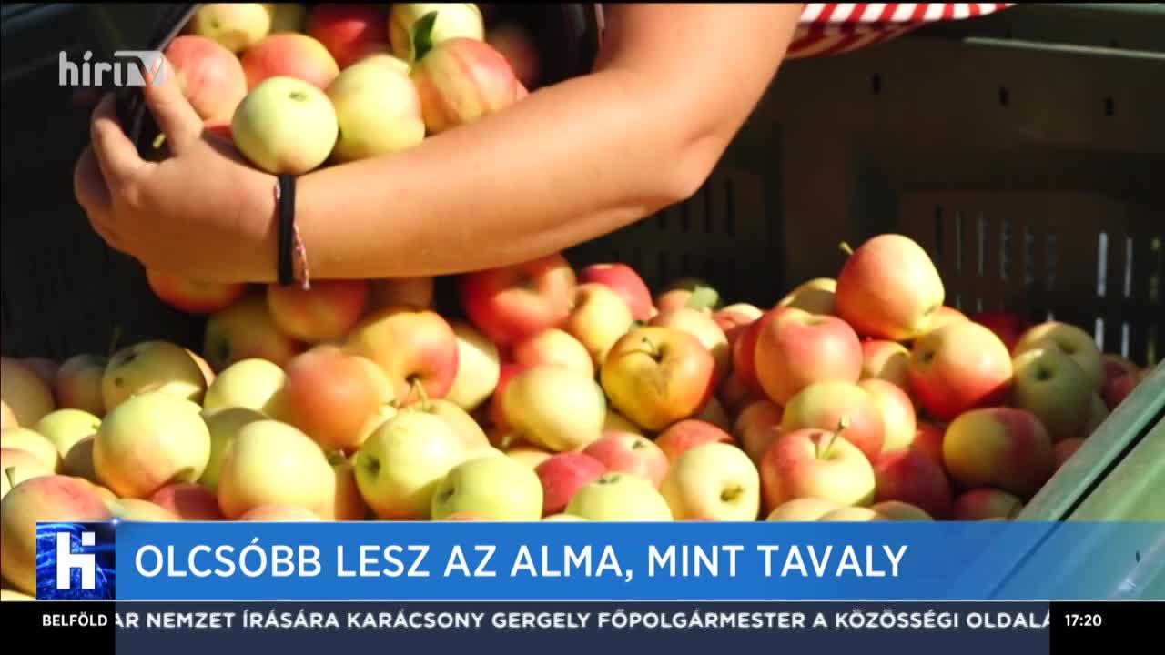 Olcsóbb lesz az alma, mint tavaly